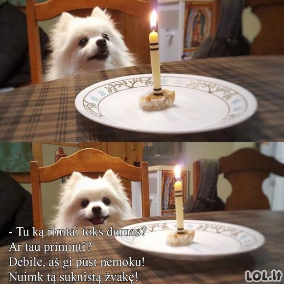 Gimtadienio tortas šuniui