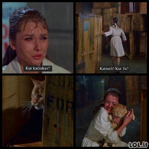 Kačiukas pasimetė