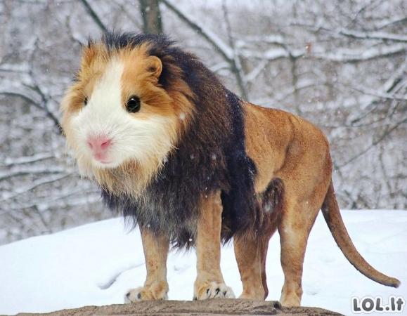 Juokingiausi gyvūnų hibridai [GALERIJA]