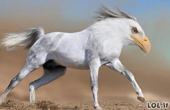 Juokingiausi gyvūnų hibridai (36 nuotraukos)