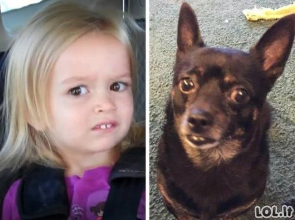 Šunys - kaip žmonės (18 foto)