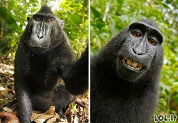Gyvūnai darosi asmenukes (48 nuotraukos)