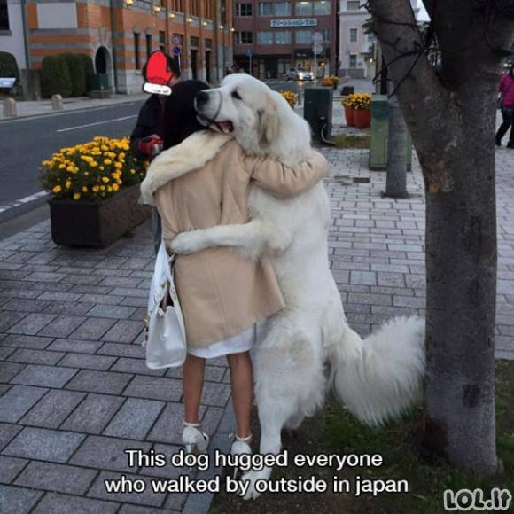 Smagios gyvūnų nuotraukos [30 paveikslėlių]