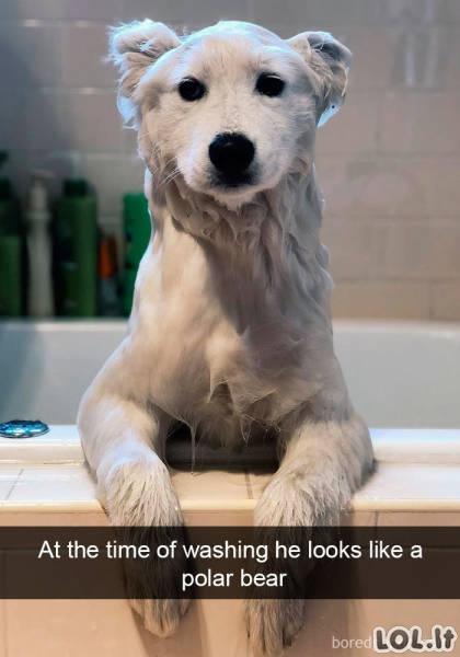 Smagus gyvūnų gyvenimas [30 nuotraukų]