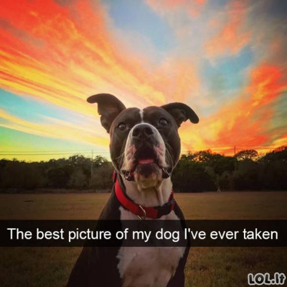 Linksmos nuotraukos iš gyvūnų pasaulio (30 paveikslėlių)