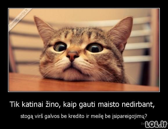 Lengvas katinų gyvenimas