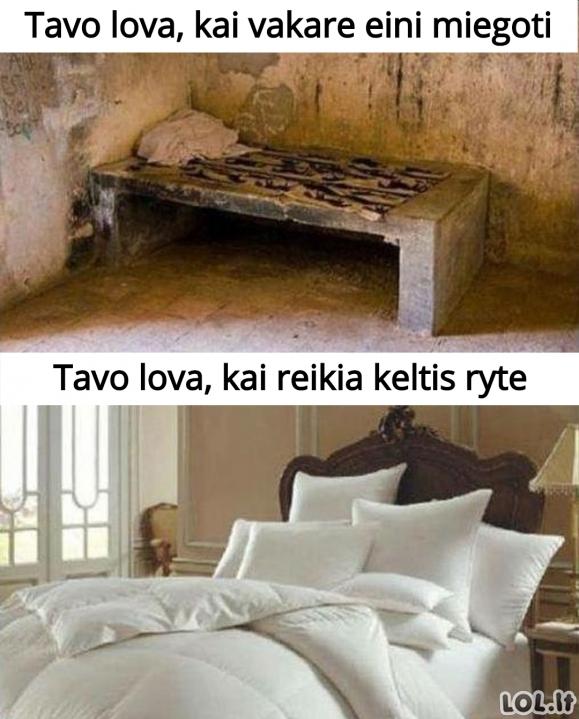 Tavo lova
