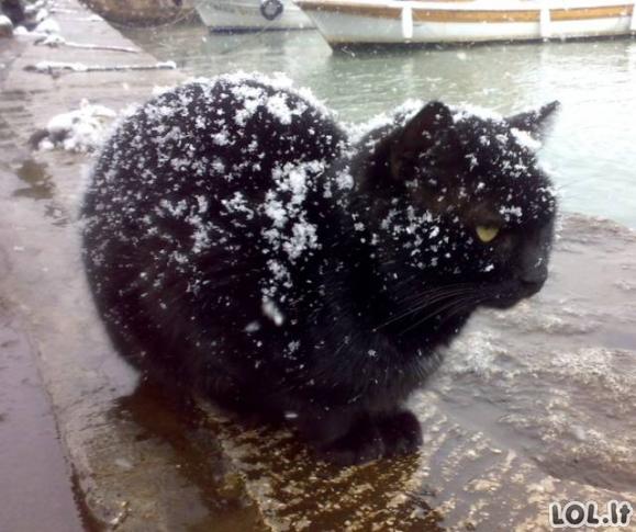 Katinai ir sniegas - du nesuderinami dalykai (24 paveikslėliai)