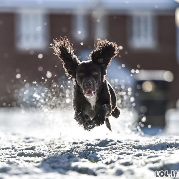 Smagiausios gyvūnų reakcijos į sniegą [GALERIJA]