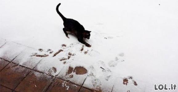 Smagiausios gyvūnų reakcijos į sniegą (44 nuotraukos)
