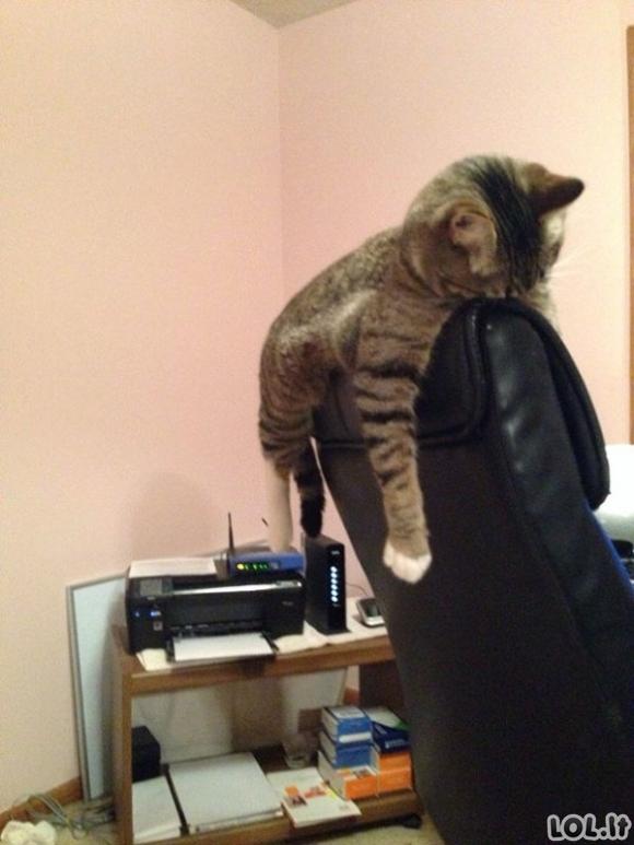 Katinai miega pačiose juokingiausiose pozicijose [GALERIJA]