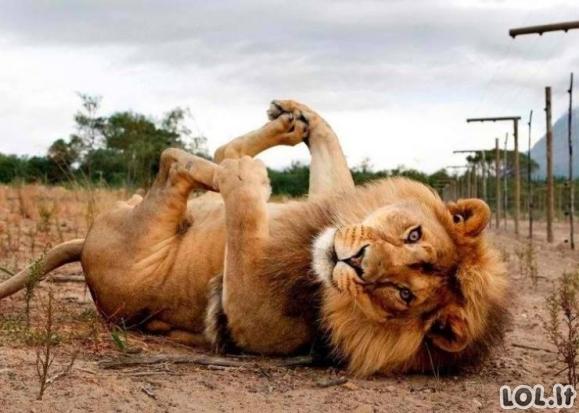 Gyvūnai padaro mūsų dieną geresne [GALERIJA]