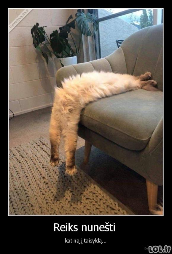 Katinas sugedo