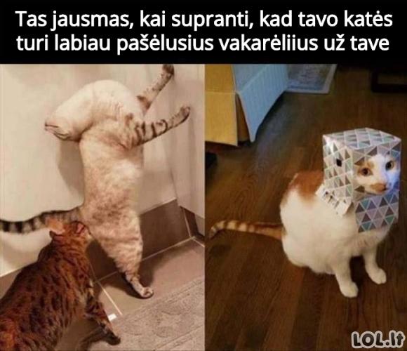 Kačių vakarėlis