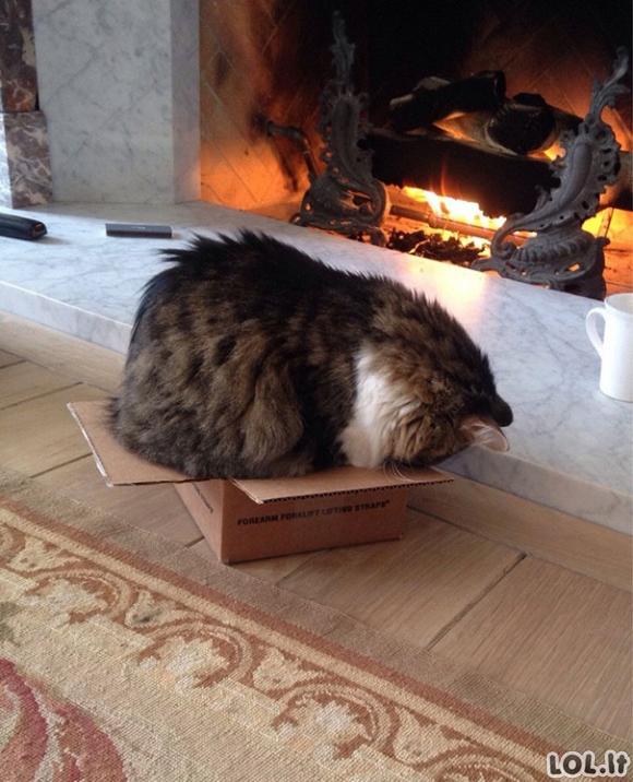 Katinai, miegantys keistose pozicijose [16 nuotraukų]
