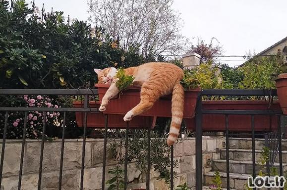 Juokingai miegantys katinai [GALERIJA]