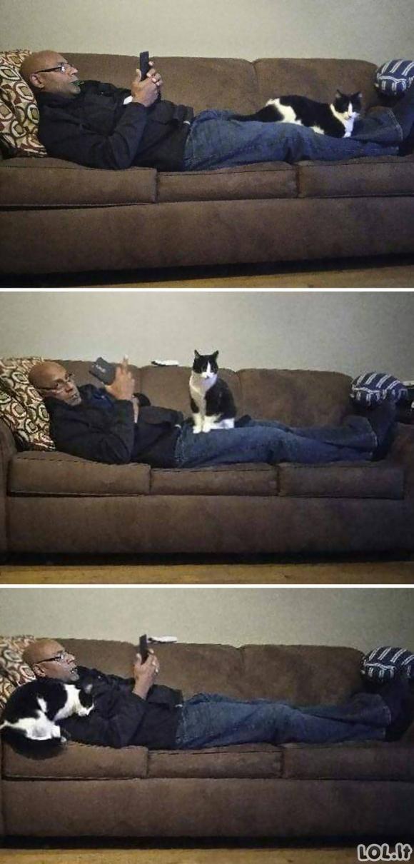 """Jie sakė, kad """"tikrai nenori jokių katinų namuose"""" [GALERIJA]"""