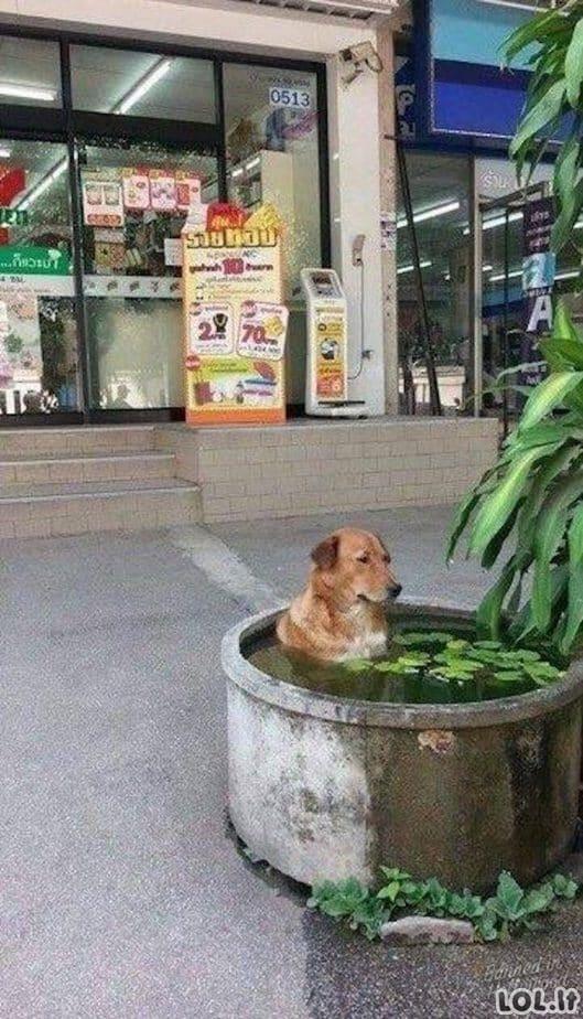 Ar pasiilgote labai karštos vasaros? [GALERIJA]