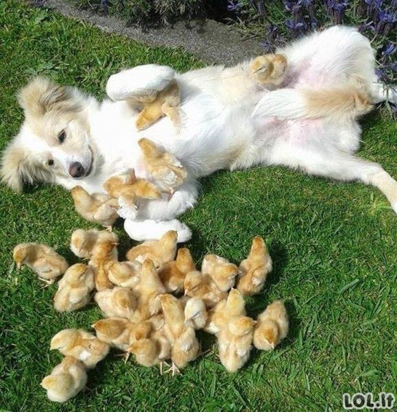 Smagus gyvūnų gyvenimas [GALERIJA]