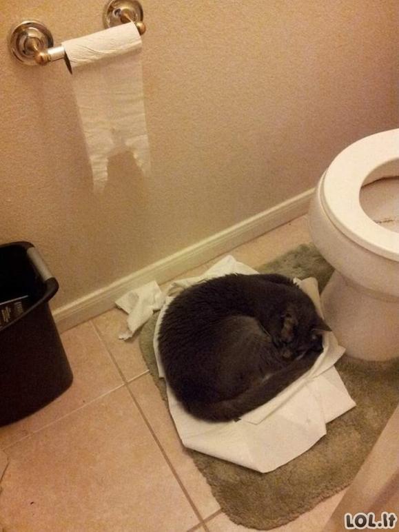 Katinai, kurie pamiršo, kaip būti katinu [GALERIJA]