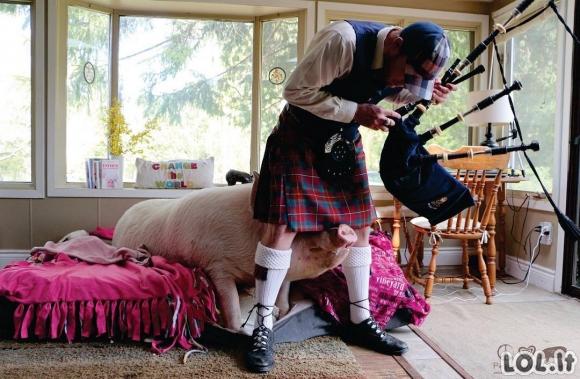 Kai sugalvoji auginti kiaulę namuose [GALERIJA]