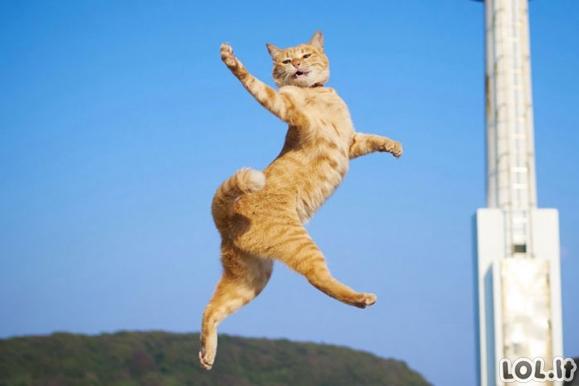 Kai katinai užsinori pašokti [GALERIJA]