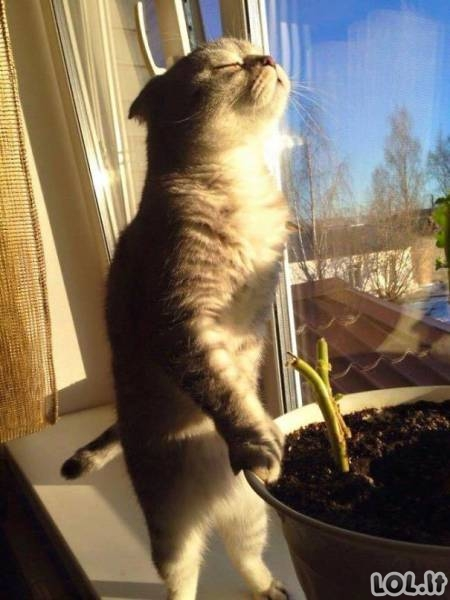 Katinai mėgaujasi saulės spinduliais [GALERIJA]