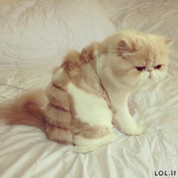 Juokingai apkirpti katinai [GALERIJA]