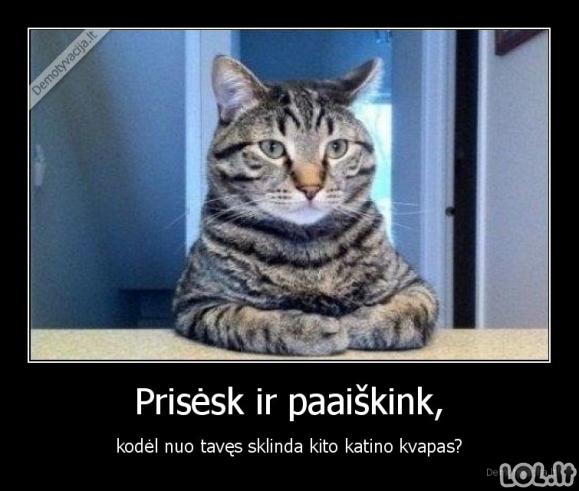 Katinas suuodė