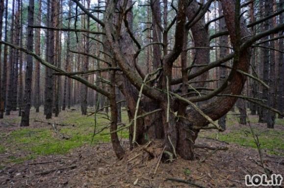 Nuotraukos, parodančios pasekmes po Černobylio avarijos [GALERIJA]