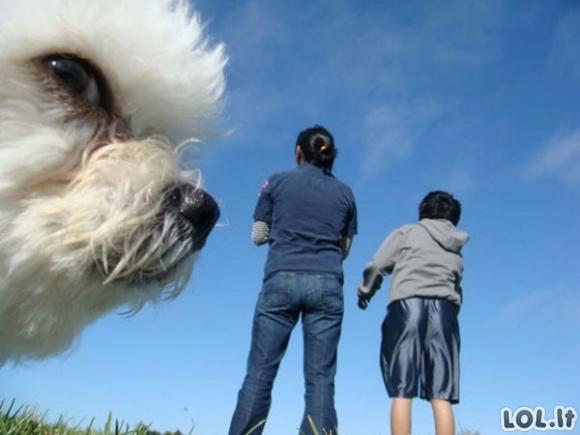 Šunys - nuotraukų gadinimo meistrai [GALERIJA]