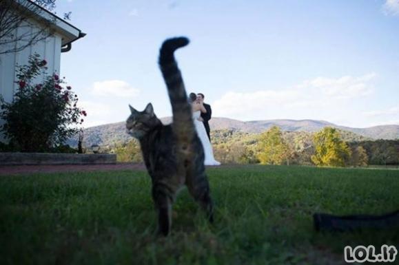 Katės begėdiškai gadina nuotraukas [GALERIJA]