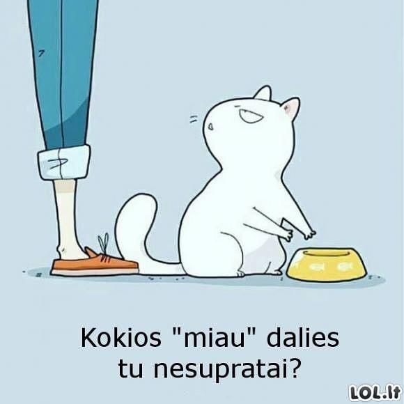 Nepatenkintas katinas