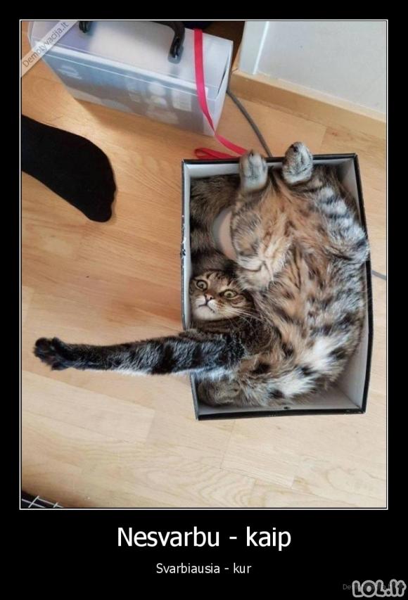 Susigrūdimas dėžėje
