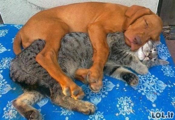 Gyvūnai gali išmokyti mus draugystės [GALERIJA]