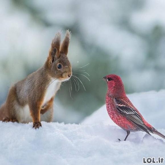 Kai gyvūnai susitinka su kitomis rūšimis [GALERIJA]
