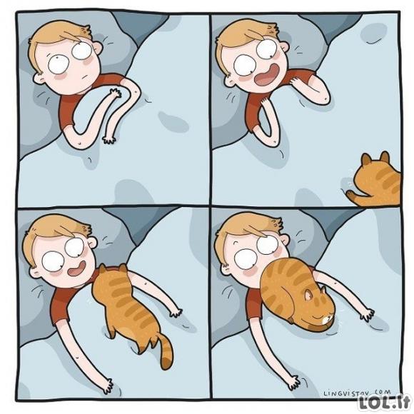 Rytas su katinu
