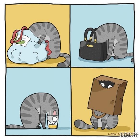 Katinai - jie visada ieško, kur įkišti savo snukutį