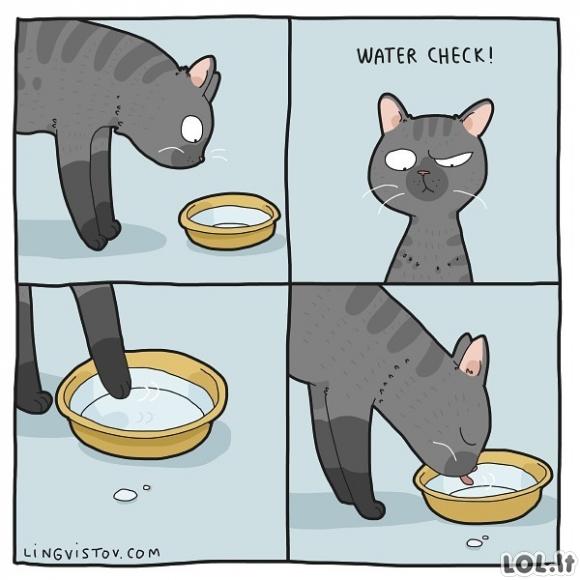 Katinai ir vandens patikrinimas