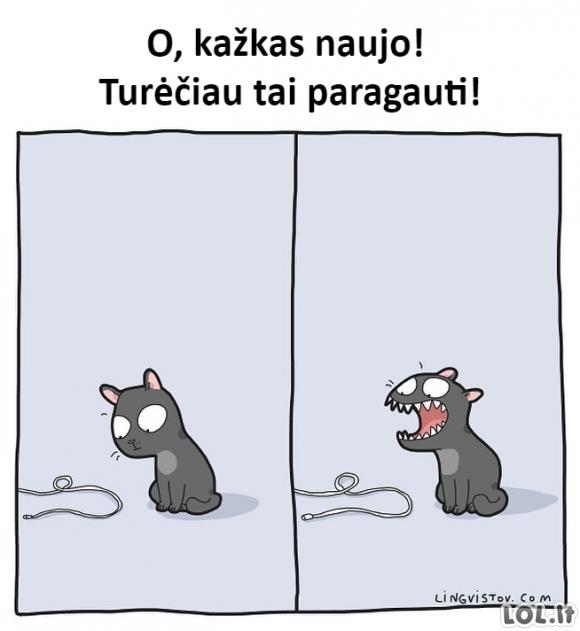 Kai katinai pamato naują daiktą