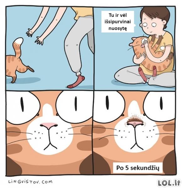 Katino nosytė