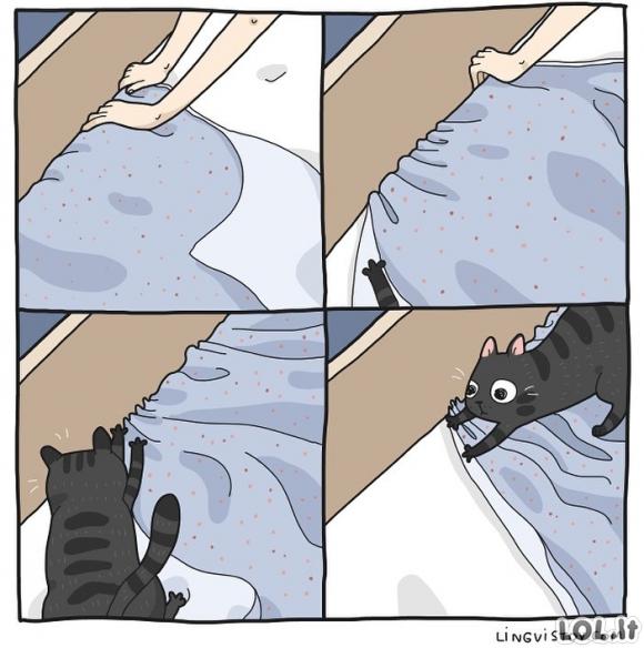 Kai bandai pasikloti lovą, bet katinas šalia