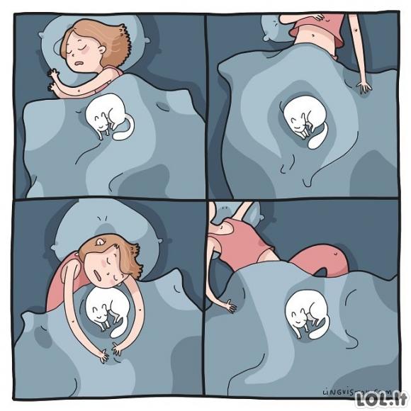 Miegas su katinu