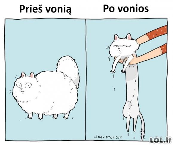 Katinai ir vonia
