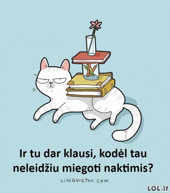 Kerštingas katinas