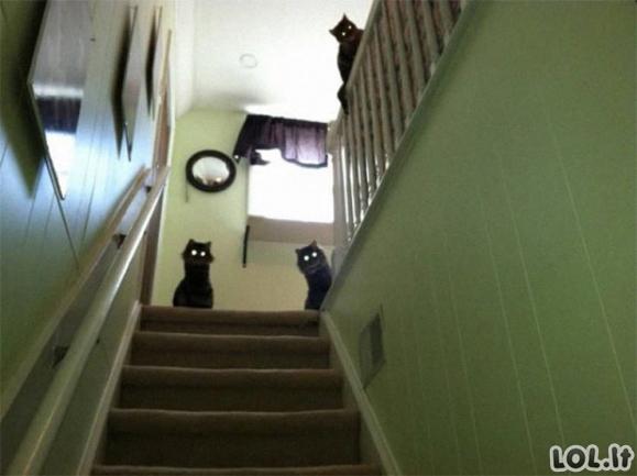 Šie gyvūnai atrodo kaip atsiųsti velnio [GALERIJA]