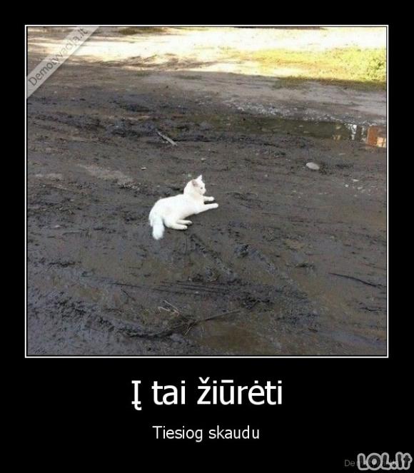 Baltas katinukas purve