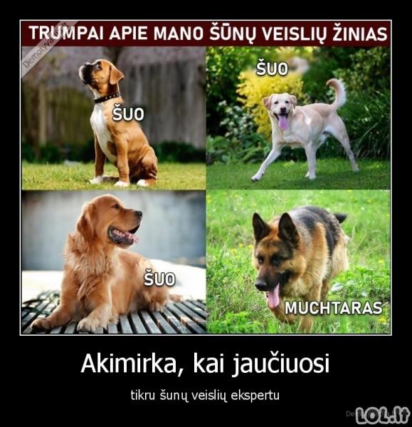 Šunų veislių ekspertas