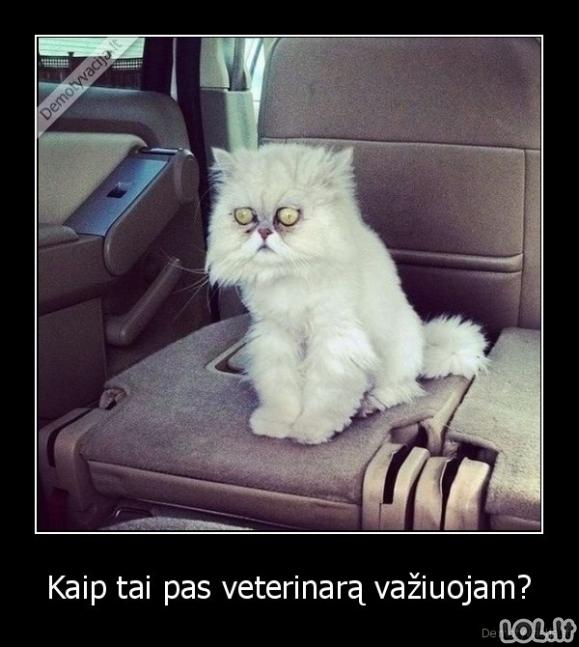 Pas veterinarą