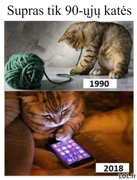 Kačių prisiminimai